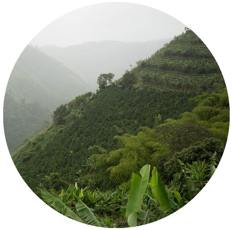 кафе плантация в Колумбия